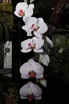 Orchids - Us Botanic Garden - 011335 Art Print