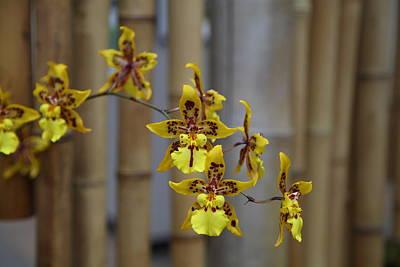 Botanic Photograph - Orchids - Us Botanic Garden - 011342 by DC Photographer