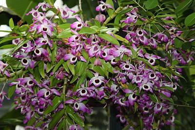 House Photograph - Orchids - Us Botanic Garden - 01135 by DC Photographer