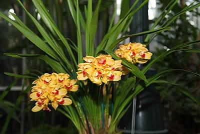 Orchids - Us Botanic Garden - 01137 Art Print by DC Photographer