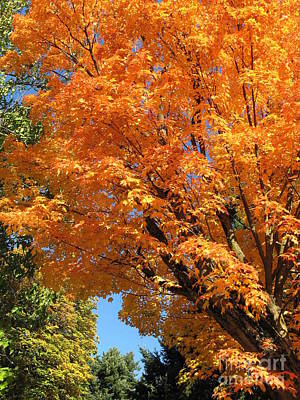 Photograph - Oregon Autumn Maple Tree by Marlene Rose Besso