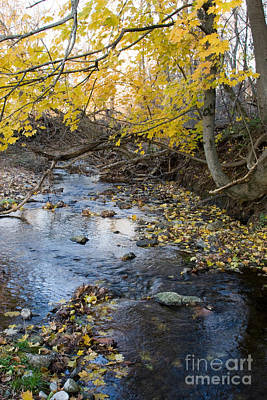 Photograph - Oregon Branch Stream  by Chris Scroggins