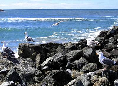 Photograph - Oregon Coast Seagulls by Will Borden