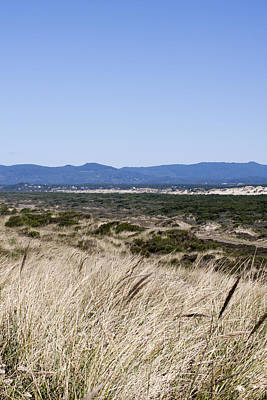 Photograph - Oregon Dunes National Recreation Area - 0002 by S and S Photo