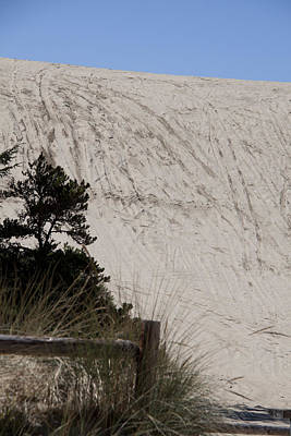 Photograph - Oregon Dunes National Recreation Area - 0005 by S and S Photo