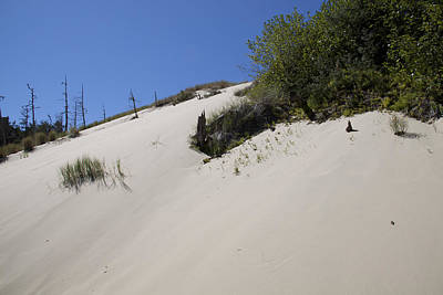 Photograph - Oregon Dunes National Recreation Area - 0006 by S and S Photo