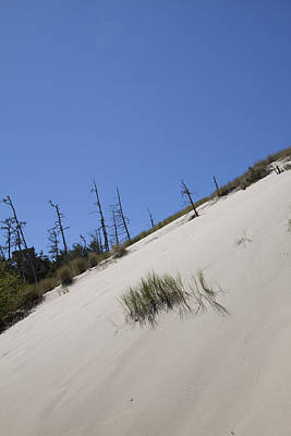 Photograph - Oregon Dunes National Recreation Area - 0007 by S and S Photo