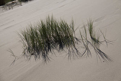 Photograph - Oregon Dunes National Recreation Area - 0008 by S and S Photo