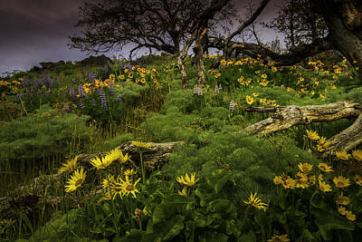Photograph - Oregon Garden 2 by Jean-Jacques Thebault