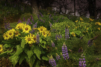 Photograph - Oregon Garden by Jean-Jacques Thebault