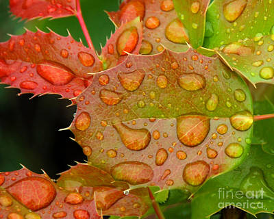 Photograph - Oregon Grape On A Rainy Day by Chuck Flewelling
