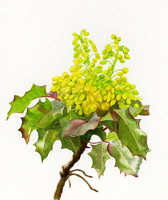 Oregon Grape White Background Original by Sharon Freeman