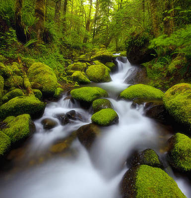 Moody Trees - Oregon Mossy Dreams by Darren White
