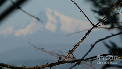 Photograph - Oregon Nature Frames Mountain by Susan Garren