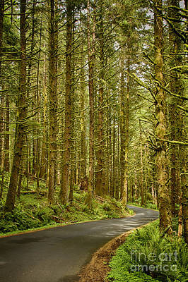 Photograph - Oregon Old Growth Forest by Carrie Cranwill