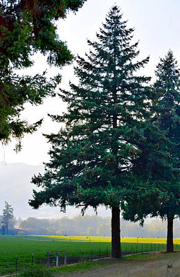 Photograph - Oregon Pine by Michele Avanti