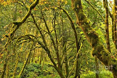 Photograph - Oregon Rainforest by Adam Jewell