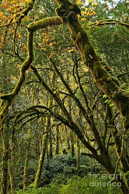 Photograph - Oregon Rainforest Green by Adam Jewell