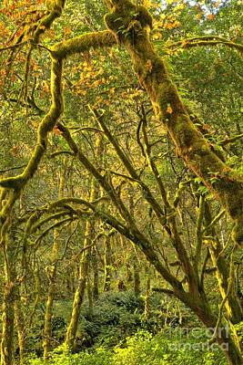 Photograph - Oregon Rainforest Portrait by Adam Jewell