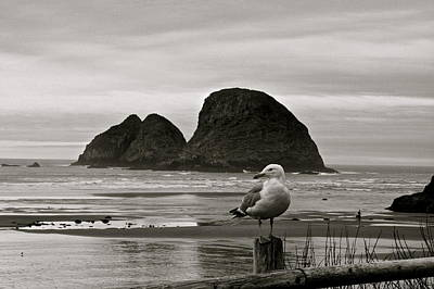 Digital Art - Oregon Shorebirds by Milton Thompson