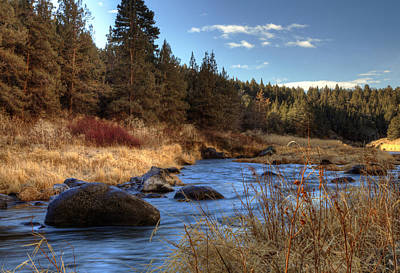 Photograph - Oregon Stream by Coby Cooper