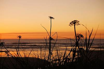 Photograph - Oregon Sunset by Angi Parks
