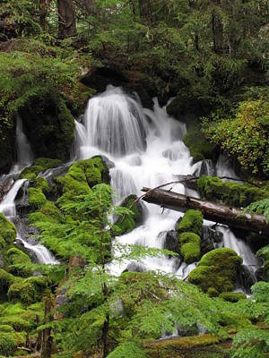 Photograph - Oregon Waterfall by Katie Wing Vigil