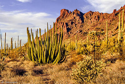 Digital Art - Organ Pipe Cactus National Monument Afternoon by Bob and Nadine Johnston
