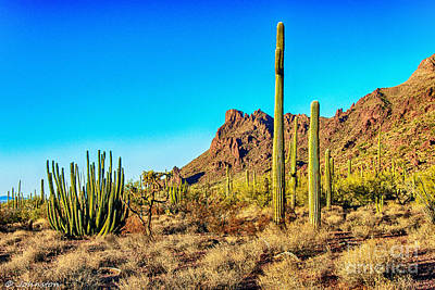 Nadine And Bob Johnston Digital Art - Organ Pipe Cactus National Monument Late Afternoon by Bob and Nadine Johnston
