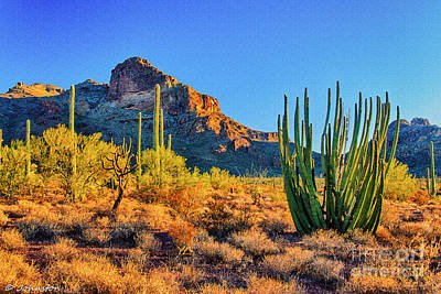 Photograph - Organ Pipe Cactus National Monument Sunset by Bob and Nadine Johnston