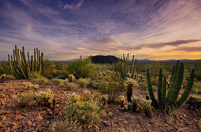 Organ Pipe Cactus Sunset  Art Print by Saija  Lehtonen