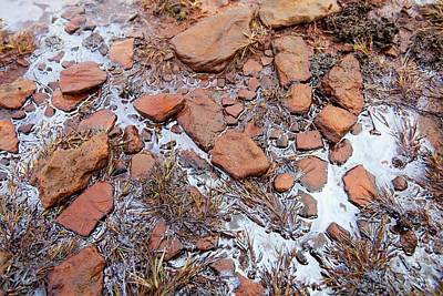 Red Sandstone Photograph - Organic Algal Bloom On A Bog by Ashley Cooper
