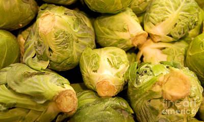 Organic Cabbage Art Print