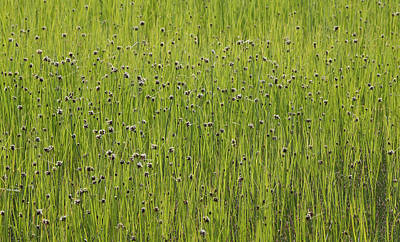 Organic Green Grass Backround Art Print