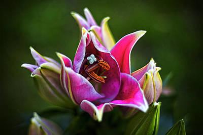 Oriental Day Lily Art Print