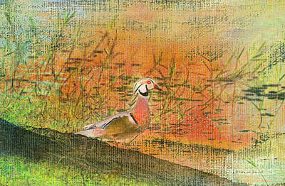 Oriental Duck Art Print by Deborah Benoit