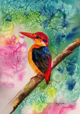 Kingfisher Drawing - Oriental Dwarf Kingfisher by Isabel Salvador