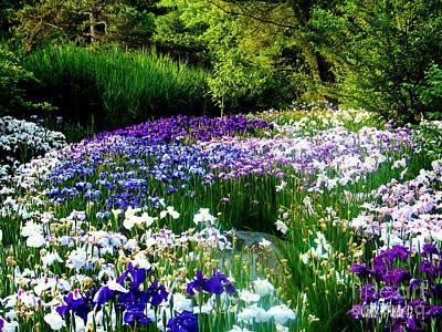 Oriental Ensata Iris Garden Art Print