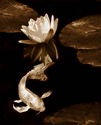 Photograph - Oriental Koi Fish And Water Lily Flower Sepia by Jennie Marie Schell