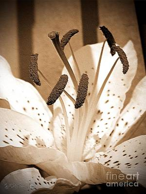 Photograph - Oriental Lily Named Muskadet by J McCombie