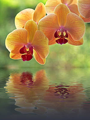 Orchids Photograph - Oriental Spa by Gill Billington