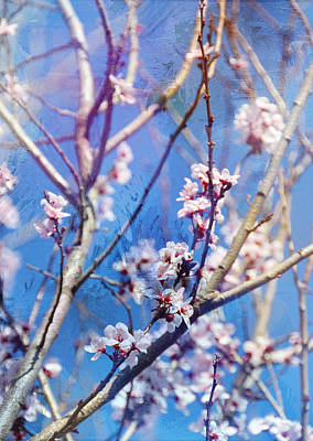 Oriental Spring Cherry Blossoms Art Print by Carla Parris
