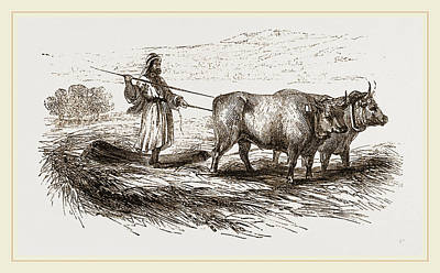 Drag Drawing - Oriental Threshing With The Drag by Litz Collection