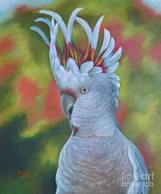 Original Animal Oil Painting Art -parrot #16-2-5-17 Art Print