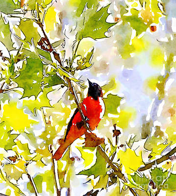 Oriole Photograph - Oriole In The Leaves by Kerri Farley