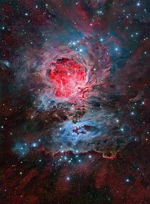 Orion Nebula Photograph - Orion Nebula by Tony & Daphne Hallas