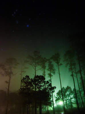 Amy Weiss - Orion Over The Emerald Wood by Paula OMalley