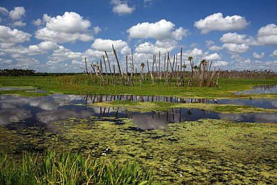 Orlando Wetlands Cloudscape 2 Art Print by Mike Reid