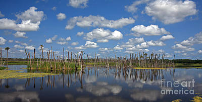 Gator Photograph - Orlando Wetlands Cloudscape 3 by Mike Reid