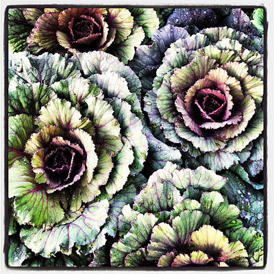 Ornamental Cabbage - I Phone Art Print by Brooke T Ryan